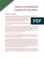 La Agricultura Campesina de Los Mayas en Yucatán