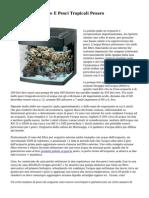 AFP Acquari, Piante E Pesci Tropicali Pesaro