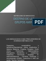Destino de Los Grupos Amino