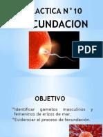 FECUNDACION.pptx
