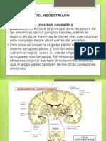 expo neuro conexiones neoestriadas.pptx