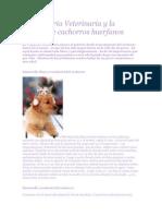 La Pediatria Veterinaria y La Crianza de Cachorros Huerfanos