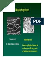 Ascomicetes.pdf
