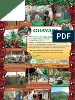 GUAYAPI TRôPiCAL Français