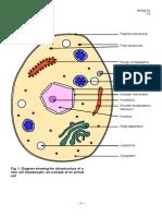 2.3 Eukaryotic Cells