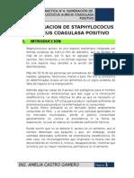 NUMERACION DE STAPHYLOCOCUS AUREUS COAGULASA POSITIVO