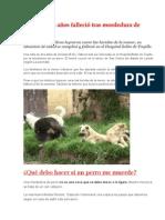 Niña de Dos Años Falleció Tras Mordedura de Perro