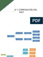 Anatomia y Composición Del Galt