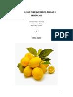 962958476.El Limon, Sus Enfermedades, Bacterias y Beneficios