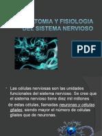 Anatomia y Fisiologia Sn