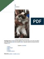 grumpi cat.pdf