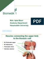 Biomedic (Myology)