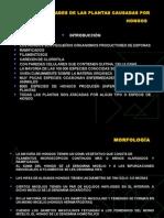 enfermedades causadas por hongos pdf