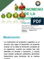 Expo.maduracion