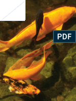 Determination of biometric parameters of fish by image analysis