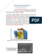 Surtos de Mastite Por Mycoplasma Bovis