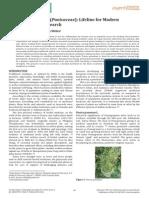 Review on Punica Granatum