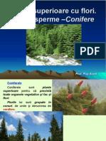 Lectie 22 Plante Superioare Cu Flori.gimnosperme Conifere.