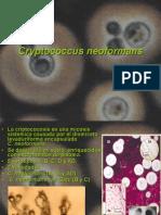 Cryptococus (1).ppt