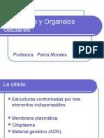 Celulas, Organelos y Estructuras