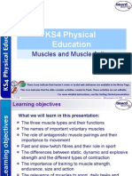 KS4 Muscles and Muscle Action Physical Education