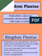 Plants_21-24_