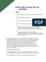 Organización del cuerpo de las plantas.docx