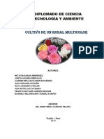 Informe Final Proyecto (Diplomado)de Rosas Multicolores1