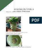 Plante Sementes de Limão e Deixe Sua Casa Cheirosa