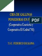 EXPOSICION DE FEDERICO.pdf