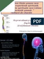 Coloana_vertebrala+ACHILINA