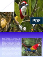 South America_s Well-Known Bird-Watching Destinations