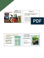 Mollusca y Annelida