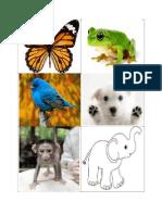 Animals Pt Joc Cls 2 Fairyland a Butterfly