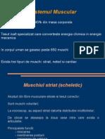 Sistemul muscular.ppt