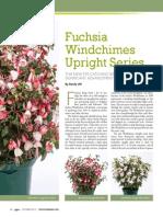 Fuchsia Upright Series