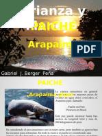 paiche 2.pptx