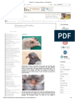 FOWL POX - Diseases of Poultry - The Poultry Site