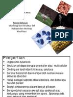Mikrobiology Fungi 050215 Medis
