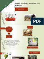 Clonación de Plantas y Animales Con Fines Benéficos