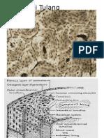 Histologi Tulang