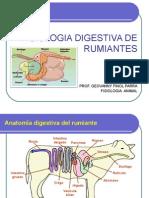 Fisiología Digestiva de Rumiantes