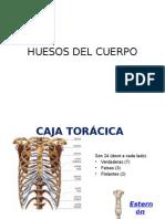 Huesos Del Torax