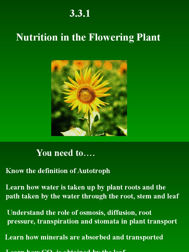 3 3 1 nutrition in the flowering plant | stoma | root