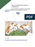Perú Es Líder en Crianza de Cuyes a Nivel de Sudamérica