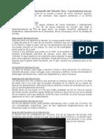 Características e Información Del Tiburón Toro