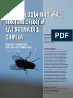 insectos en la escena del crimen