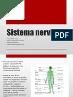 Sistema Nervioso clase