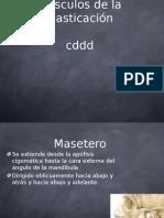Anato Buc. Musculos Masticadores