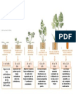 etapas fenologicas de la zanahoria
